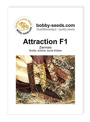 Bobby-Seeds Ziermaissamen Attraction F1 Portion von Bobby-Seeds Saatzucht