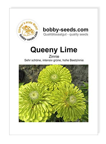 Queeny Lime Zinnie von Bobby-Seeds Portion von Bobby-Seeds Saatzucht