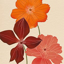 Eurographics KAK1025 Kate Knight, Orange Flower Burst 50 x 50 cm, Hochwertiger Kunstdruck von Eurographics