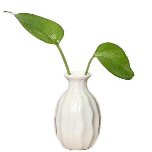 Pflanzen Und Andere Gartenausstattung Von Jungen Online