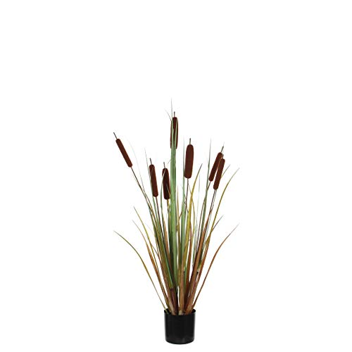 MICA Decorations Cattail Grass, braun, 13 von MICA Decorations
