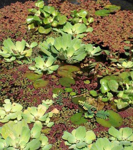 Brunnen teiche und andere gartenausstattung von m hlan for Wasserpflanzen gegen algen teich
