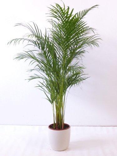 Zimmer kunstpflanzen und andere wohnaccessoires von - Palme zimmer ...