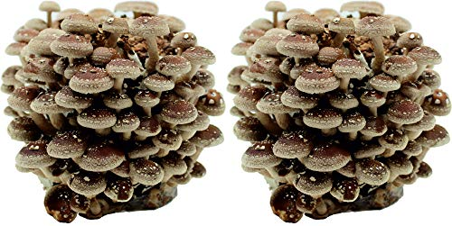 pflanzen und andere gartenausstattung von pilzmaennchen. Black Bedroom Furniture Sets. Home Design Ideas