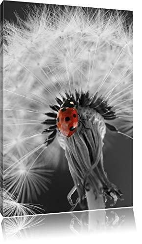 Home Décor Items Marienkäfer auf einer weißen Blume Leinwandbild Wanddeko Kunstdruck Home, Furniture & DIY