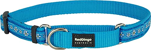 Red Dingo Martingale Daisy Chain Collar, Medium-Large, Turquoise von Red Dingo