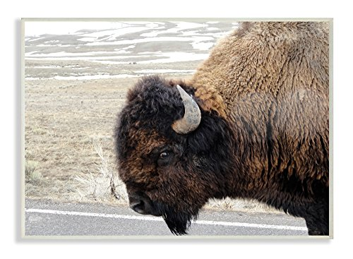 The Stupell Home Décor Collection Beautiful Buffalo Photography Oversized Wall Plaque Art, 13 x 19, Multi-Color von The Stupell Home Decor Collection