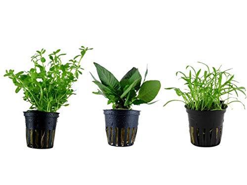 T pfe und andere k chenausstattung von tropica online for Wasserpflanzen ikea
