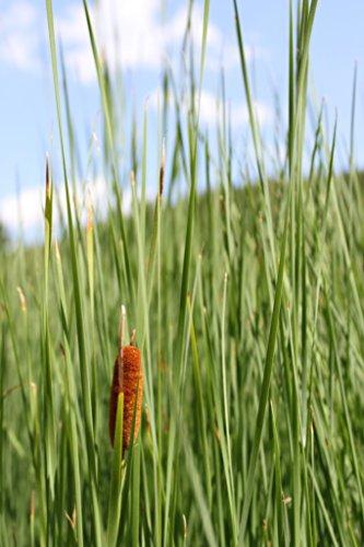 Pflanzen und andere gartenausstattung von wasserpflanzen for Wasserpflanzen ikea