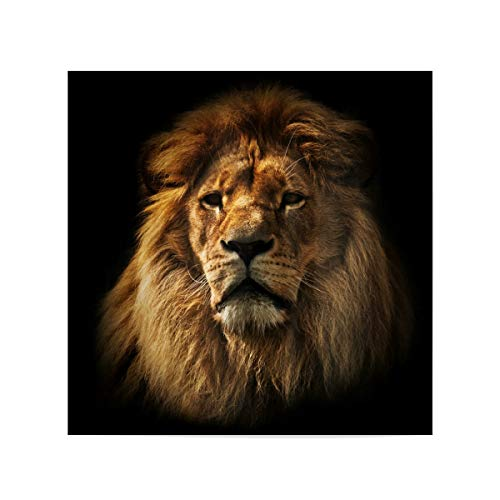 artboxONE Poster 20x20 cm Reise/Afrika Lion Portrait with Rich Mane on Black - Bild Lion Africa African von artboxONE