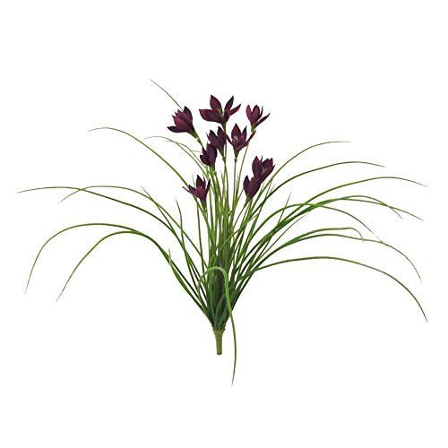 lila fr hlingsbl her und weitere pflanzen g nstig online kaufen bei m bel garten. Black Bedroom Furniture Sets. Home Design Ideas